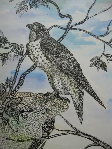 """Vogelzeichnung """"Falke"""" Zentangle"""