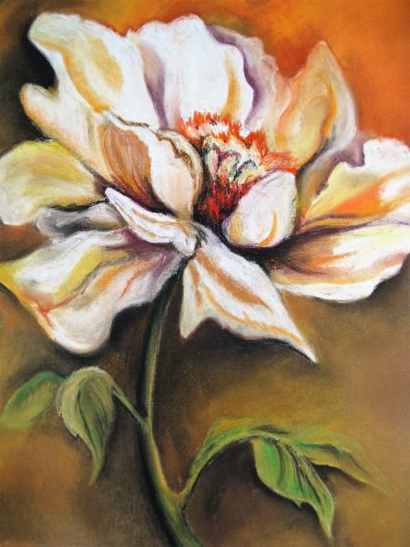 """Blumenzeichnung """"Weißer Traum"""", Pastellzeichnung"""