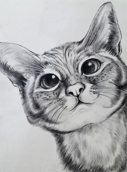 "Tierzeichnung ""Neugierige Katze"""